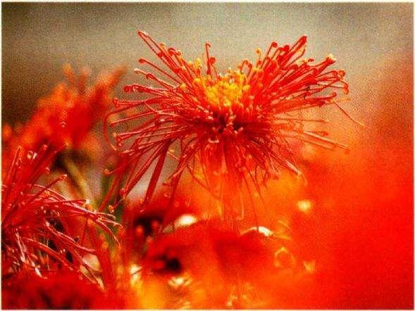 花卉摄影如何虚化背景突出主体
