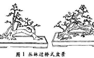 丛林过桥式盆景怎么配盆造型的4个方法