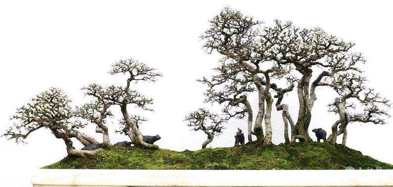 养护树木盆景怎么光照通风