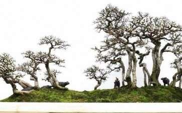 养护树木盆景怎么光照通风的3个方法