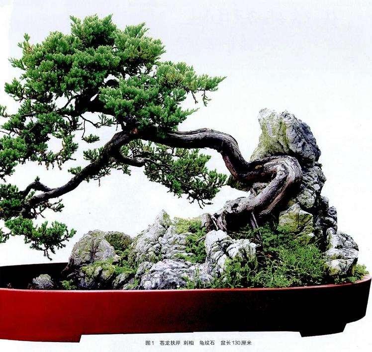 林鸿鑫盆景
