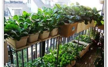 阳台盆栽容器怎么改良的方法