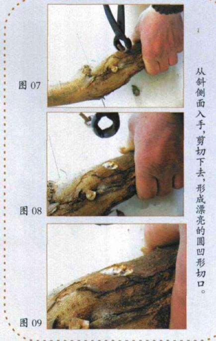盆景球节剪怎么使用
