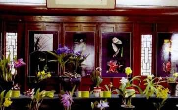 第九届福州兰花展在于山风景区举办