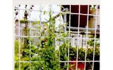 我在日本的懒人花园 有30平方 图片