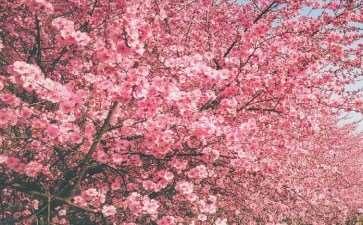 2020梅花都是由冬至春最贴近人心的花