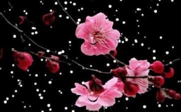 为什么诗人如此钟情梅花 图片