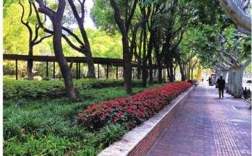 上海东湖花园绿地景观改造工程