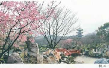 武汉东湖樱花园位于磨山南麓 占地260亩