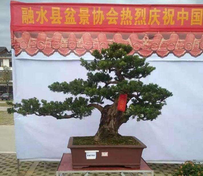 湖北花木盆景协会召开线上座谈会
