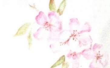 海棠花也成了我们表达情感的寄托