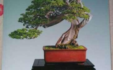 我们每个职工各订了一份全年的《花木盆景》