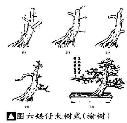 矮仔大树式盆景怎么造型