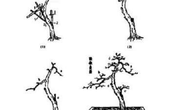 图解 高飘画意式雀梅盆景怎么制作的方法