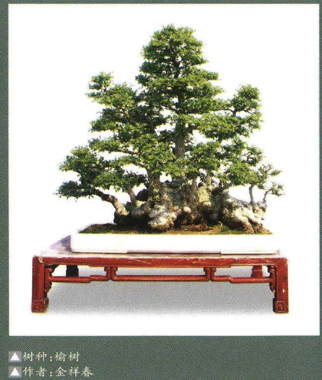 象山县协会开创举办三镇巡回盆景展