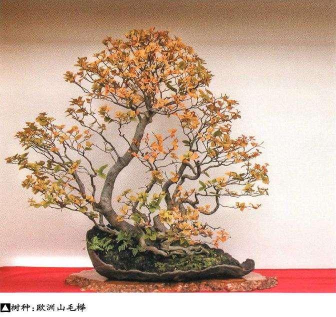 世界盆景艺术家社团名家作品