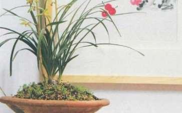 阳台养兰花怎么通风光照的3个方法