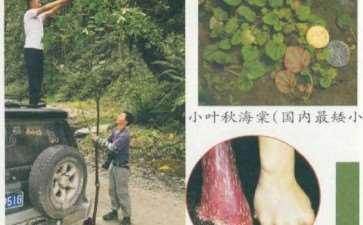 中国秋海棠植物的多样性和种类分布格局