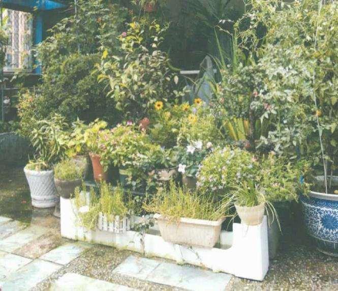 怎么为家人筑造了一方梦想花园