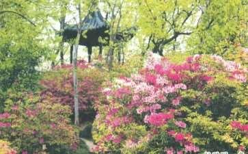 1988年 建成上海盆景植物园 图片