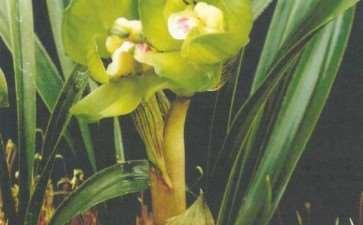 阳台养兰花怎么上盆浇水的3个方法