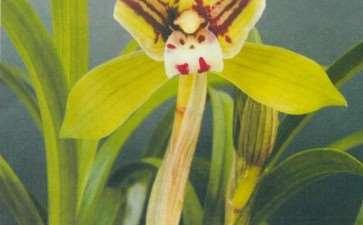 适合阳台养兰花的植料有哪些 图片