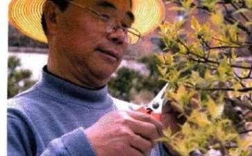 黄荆盆景怎么养护造型的5个方法 图片