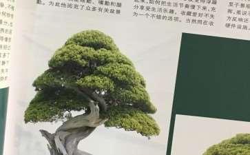 建议《花木盆景》增加世界赏石栏目