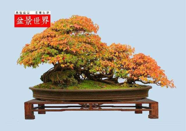 扬州成功申办2013年世界盆景协会
