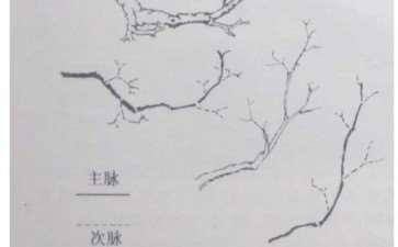 岭南盆景怎么创作的脱衣换锦法和虚枝实叶法