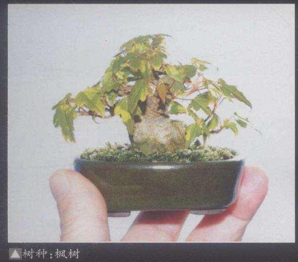 日本第十七届春雅盆景展