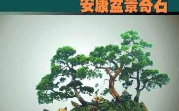 2009年 花木盆景杂志作者须知