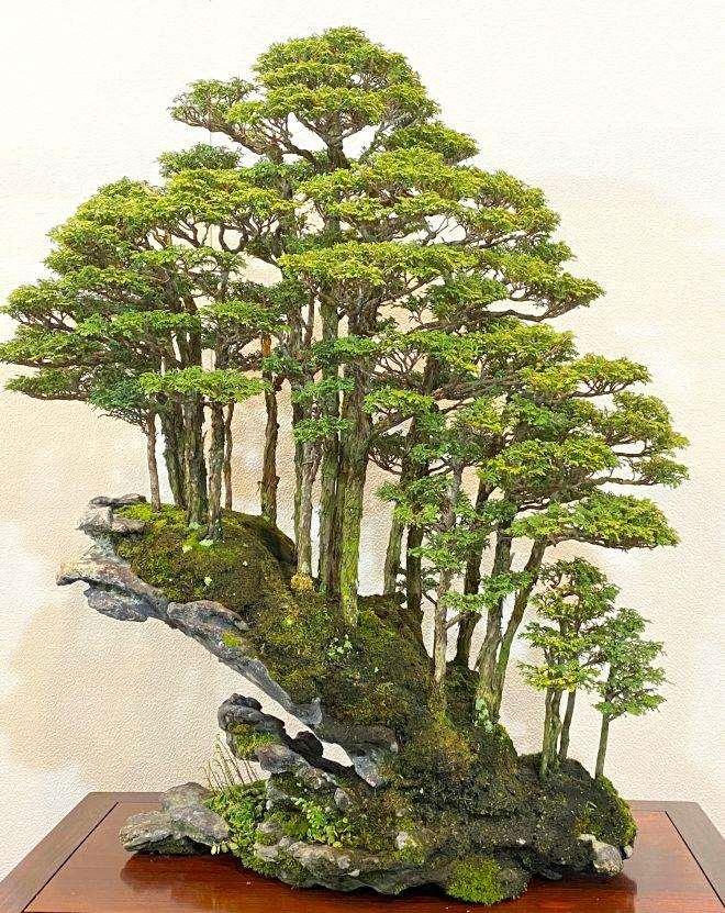 为什么国际上所广泛认可日本盆景