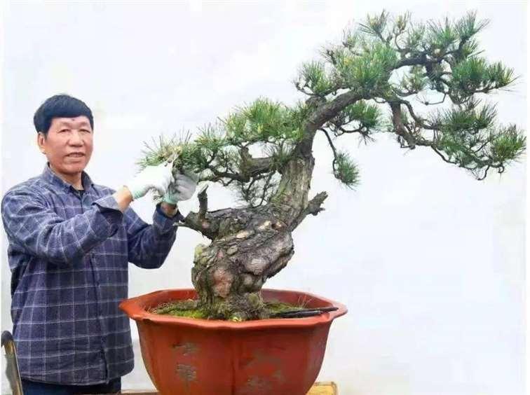 马荣成 中国盆景艺术家协会副会长