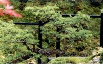 曰式绿色心境花园 图片