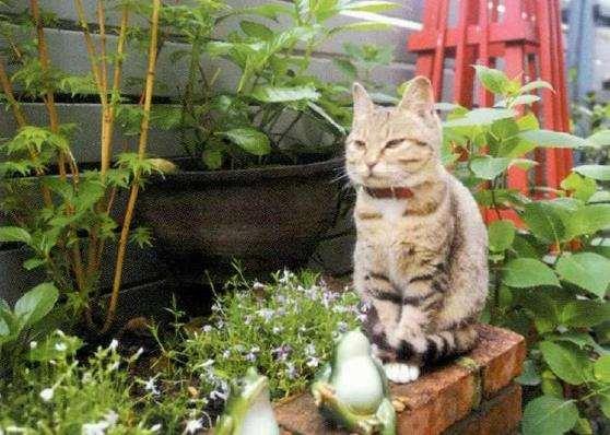 长沙市带花园的房子