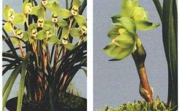 养兰花需不需要施肥 为什么 图片