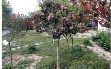 蓝丁香怎么病虫害防治和园林用途的方法