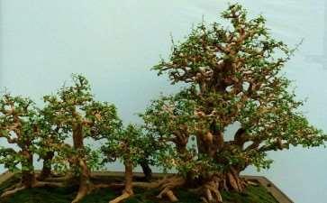 海南盆景园艺大观园的4个SWOT分析