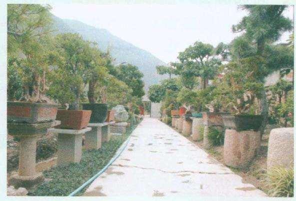 盆景植物虫害的类型及怎么防治的方法