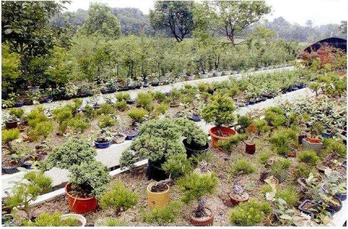 盆景植物病虫害怎么无污染防治的3个方法