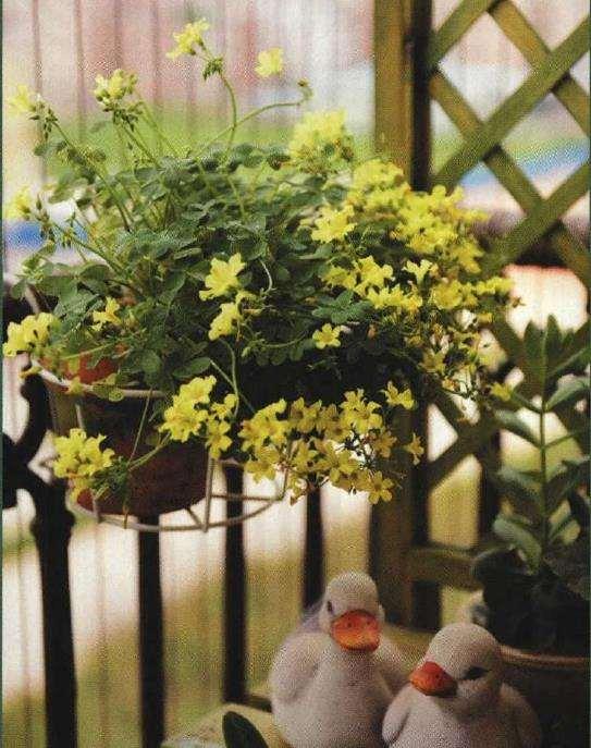 广州阳台怎么打造成微型小花园
