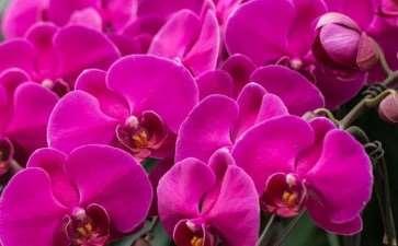 2019全国花卉产销形势分析报告