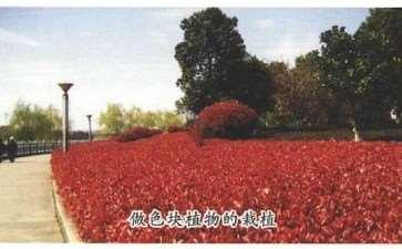 红叶石楠在园林景观中常见的4种类型