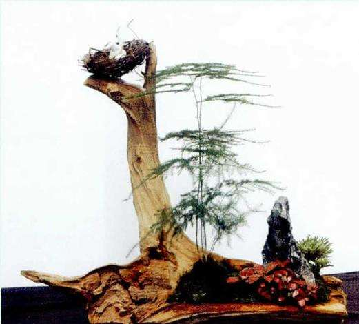 文竹盆景怎么造型