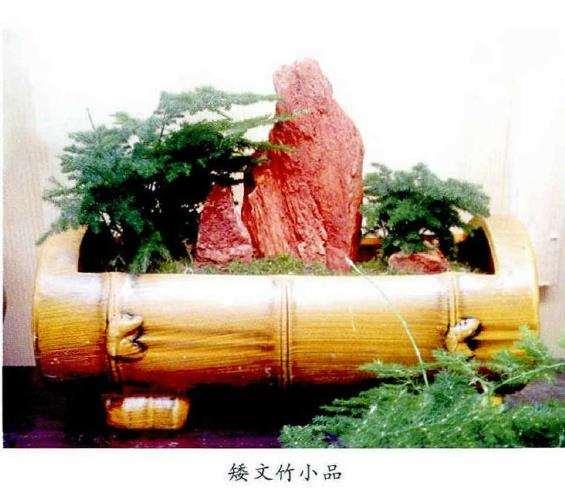 文竹盆景怎么取材