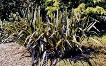 5种新西兰的可食用植物是什么 图片