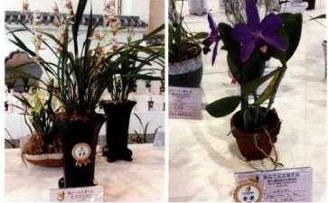 第九届中国花卉博览会精品兰花展
