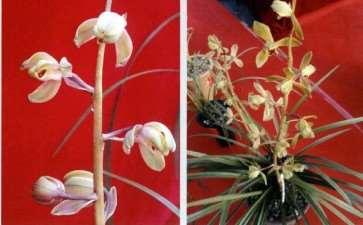 第27届中国 长沙兰花博览会 图片