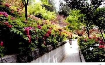 洛阳牡丹园林的5个表现形式 图片